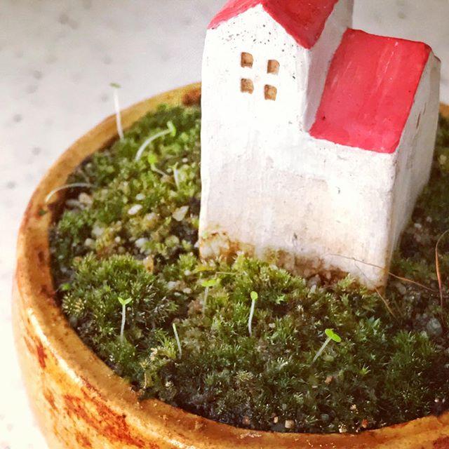 今日の苔鉢の写真