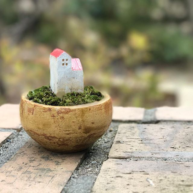 小さな苔鉢の写真