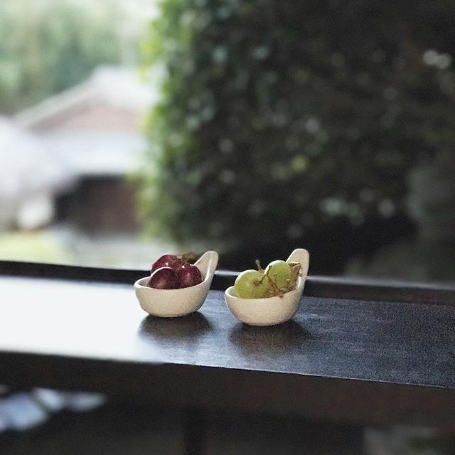 ぶどうと豆レンゲの写真