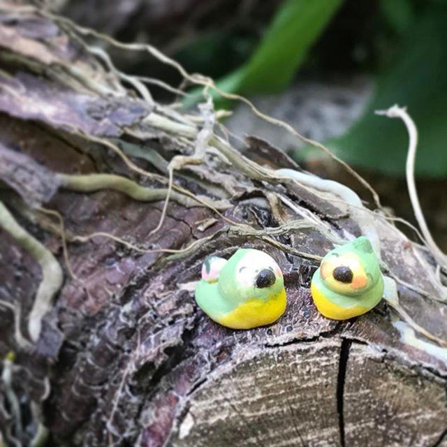 メジロの豆つぶだるまを屋外で撮影した写真