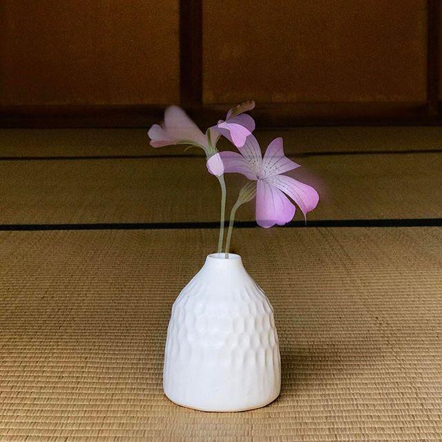 鎬(しのぎ)の一輪挿しに花を生けた写真