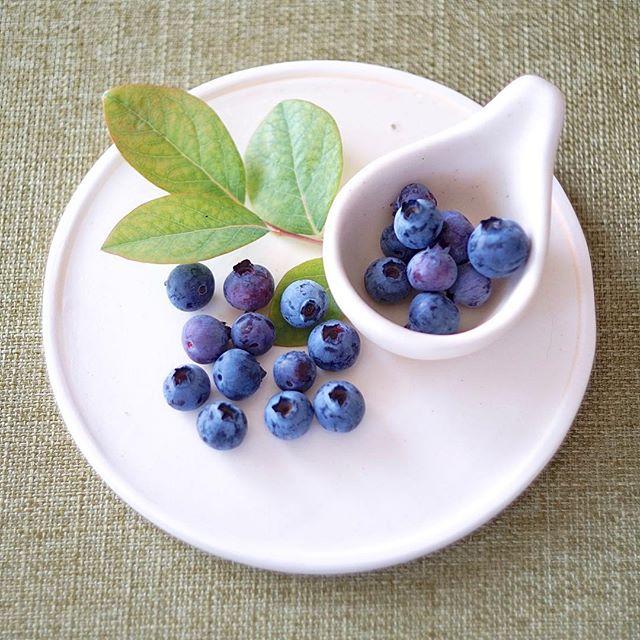 ブルーベリーを収穫した写真
