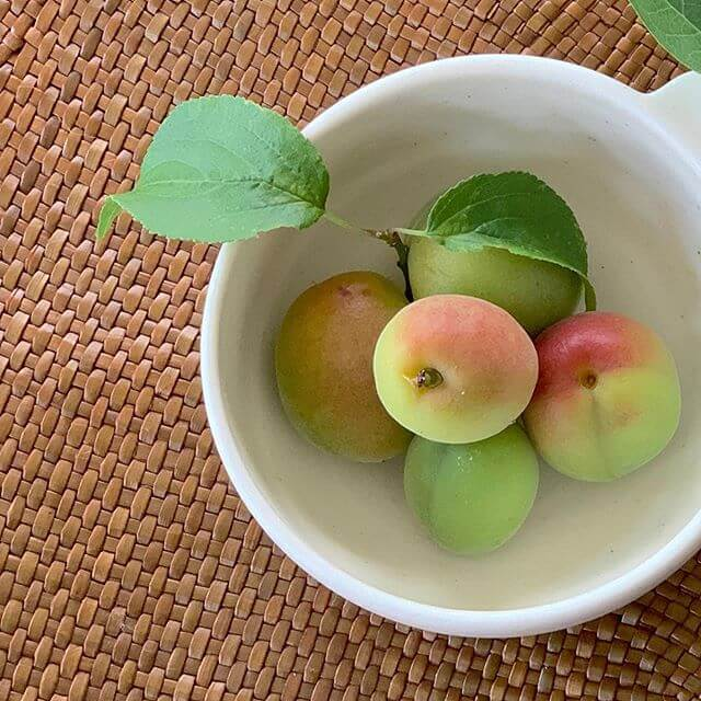 梅の実を収穫した写真