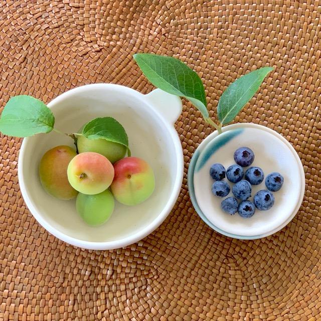 梅の実とブルーベリーの収穫