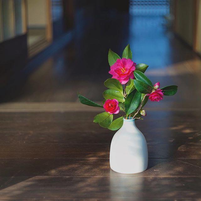 口縁にガラス釉を施した花器に山茶花