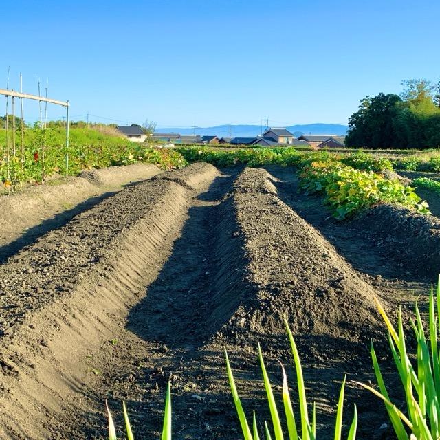 耕運機で耕して畝立てした野菜畑