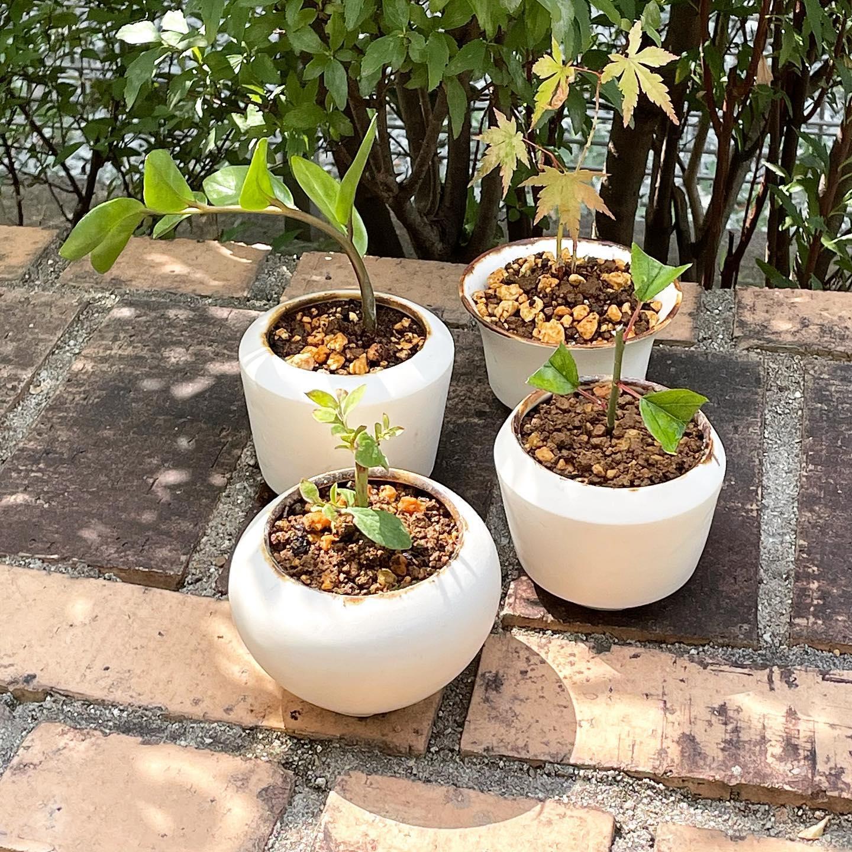 作陶、焼成して仕上がったミニ盆栽鉢